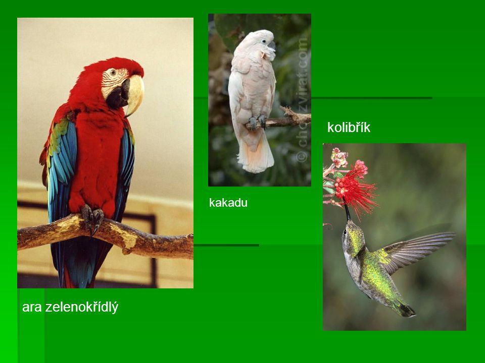 ara zelenokřídlý kakadu kolibřík