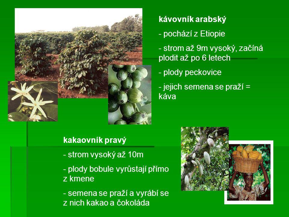 kávovník arabský - pochází z Etiopie - strom až 9m vysoký, začíná plodit až po 6 letech - plody peckovice - jejich semena se praží = káva kakaovník pr