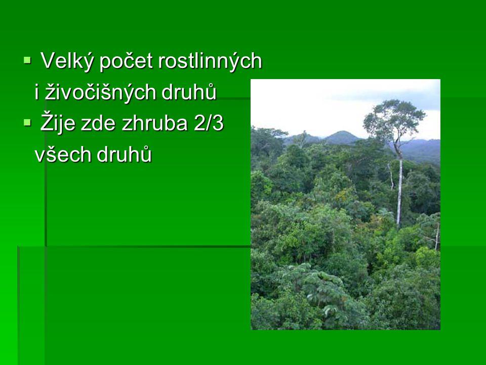  Význam  klenoty Země  lékárna Země – polovina léků pochází z pralesů  plíce Země – produkce kyslíku je nulová