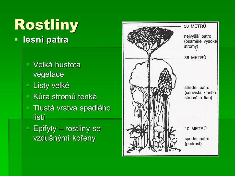 Rostliny  lesní patra  Velká hustota vegetace  Listy velké  Kůra stromů tenká  Tlustá vrstva spadlého listí  Epifyty – rostliny se vzdušnými koř