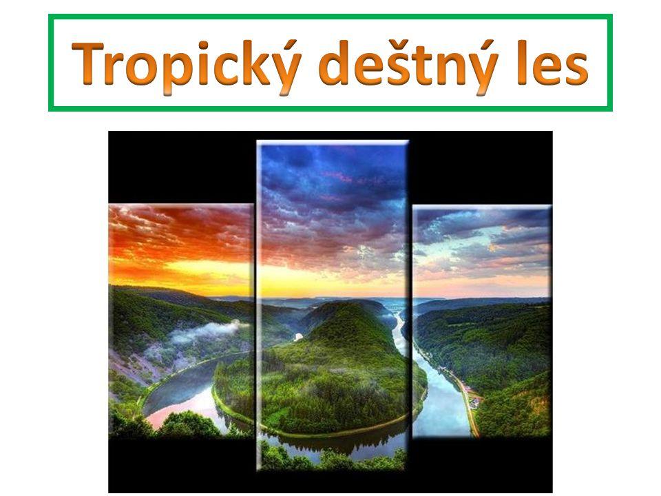 Závěr: 1.Kde se rozkládá tropický deštný les.Jaké podmínky z této polohy plynou.