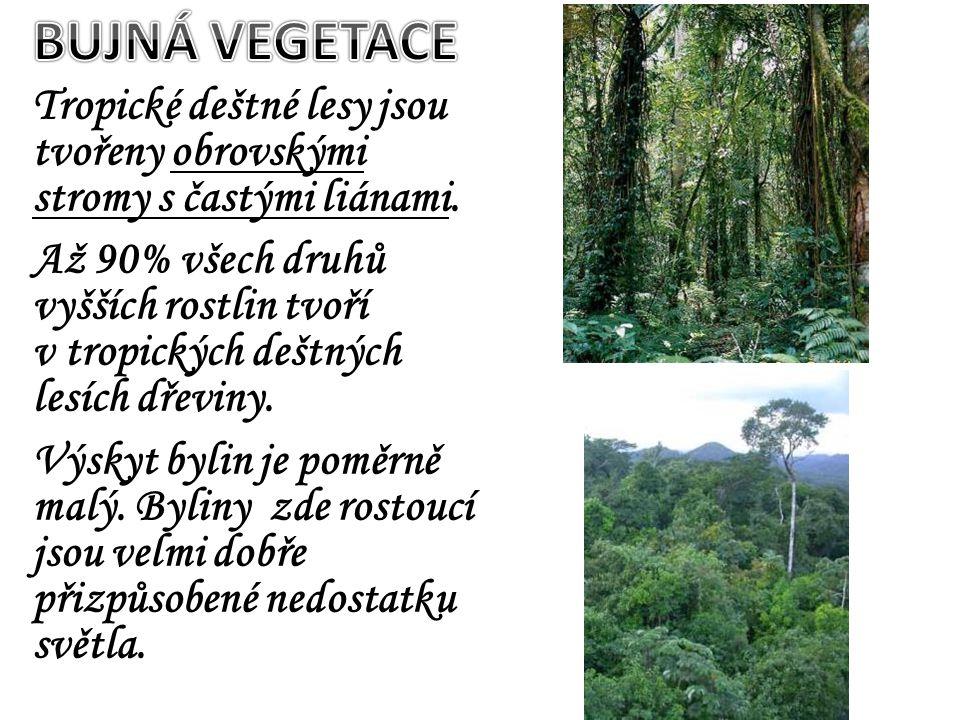 Tropické deštné lesy jsou tvořeny obrovskými stromy s častými liánami. Až 90% všech druhů vyšších rostlin tvoří v tropických deštných lesích dřeviny.