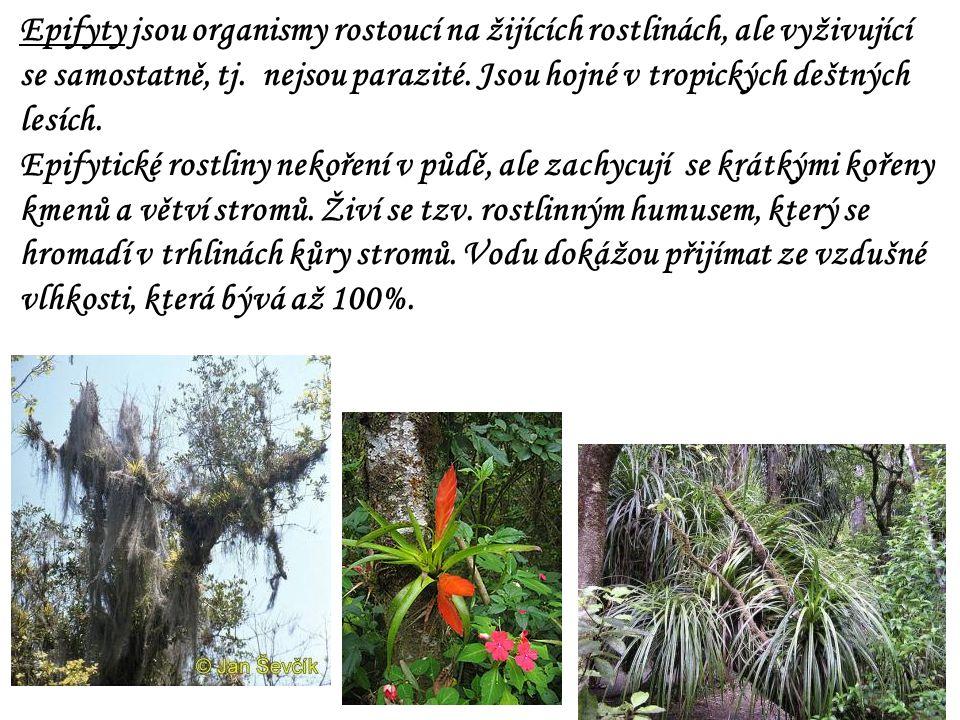 Epifyty jsou organismy rostoucí na žijících rostlinách, ale vyživující se samostatně, tj. nejsou parazité. Jsou hojné v tropických deštných lesích. Ep