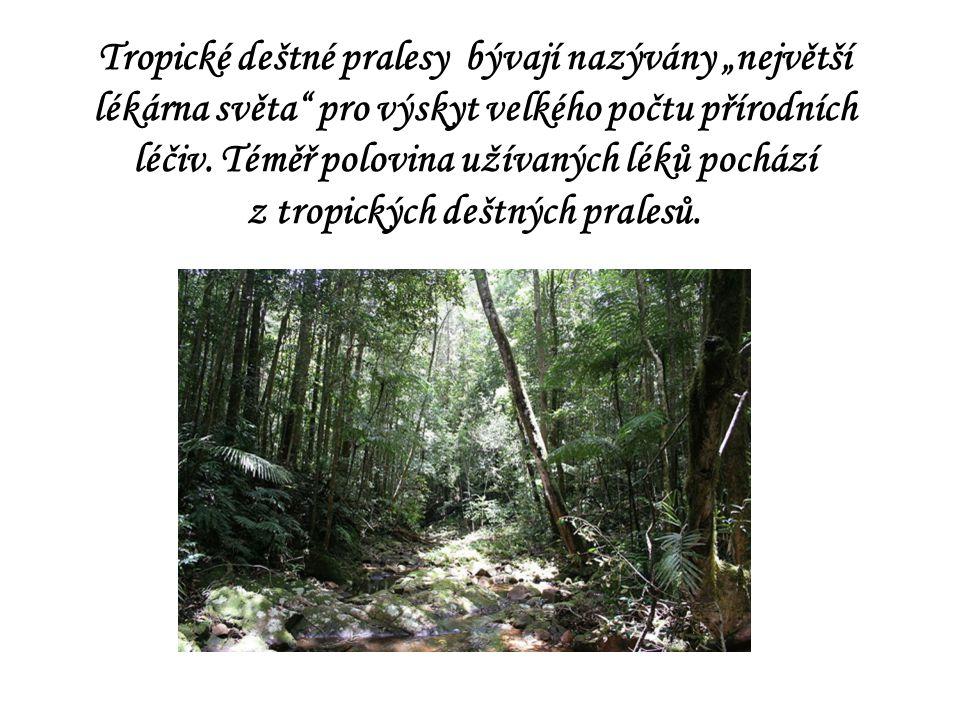 """Tropické deštné pralesy bývají nazývány """"největší lékárna světa"""" pro výskyt velkého počtu přírodních léčiv. Téměř polovina užívaných léků pochází z tr"""