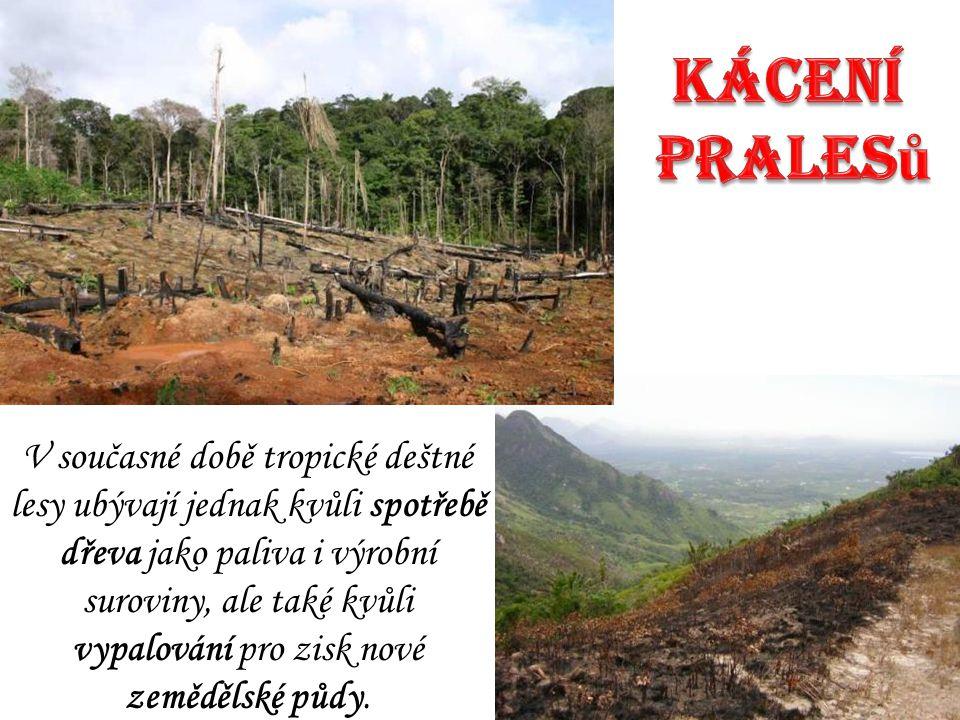 V současné době tropické deštné lesy ubývají jednak kvůli spotřebě dřeva jako paliva i výrobní suroviny, ale také kvůli vypalování pro zisk nové zeměd