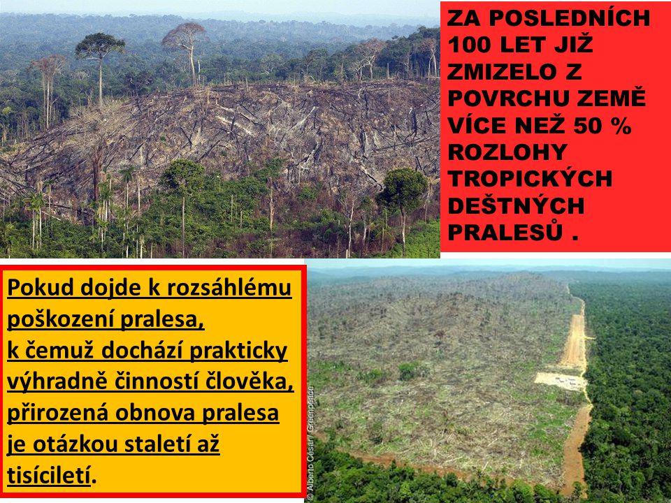 Pokud dojde k rozsáhlému poškození pralesa, k čemuž dochází prakticky výhradně činností člověka, přirozená obnova pralesa je otázkou staletí až tisíci