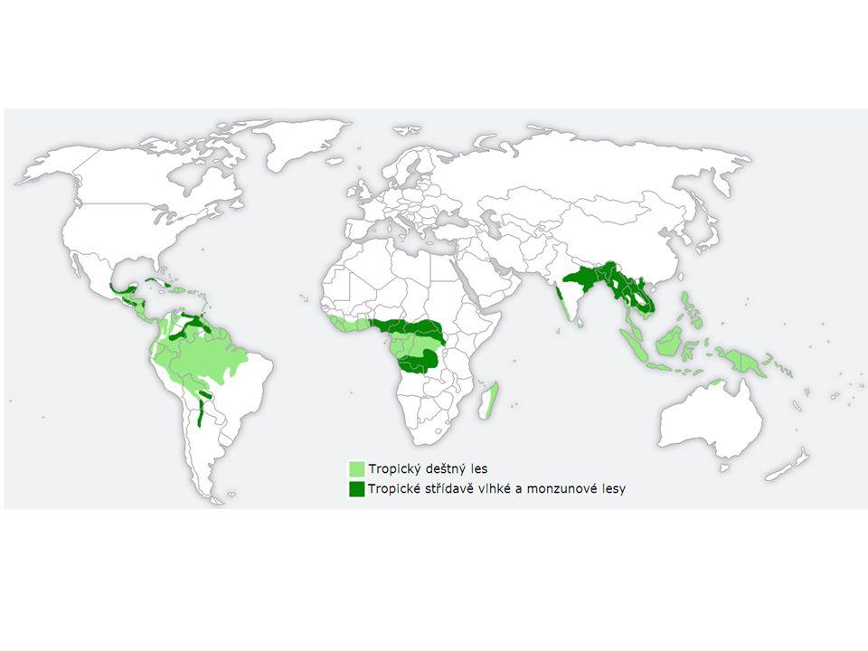 Tropické deštné lesy se vyznačují trvale teplým a vlhkým podnebím.