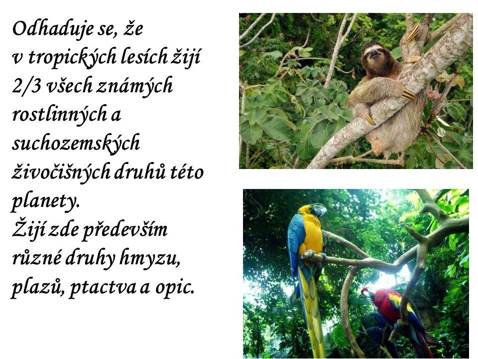 Odhaduje se, že v tropických lesích žijí 2/3 všech známých rostlinných a suchozemských živočišných druhů této planety. Žijí zde především různé druhy