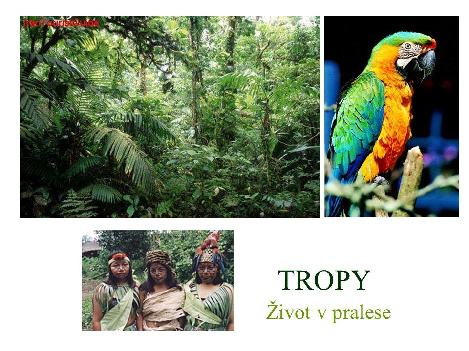 Tropické deštné lesy – v okolí rovníku (JA, AFRIKA, ASIE, AUSTRÁLIE) – horko a vlhko po celý rok.