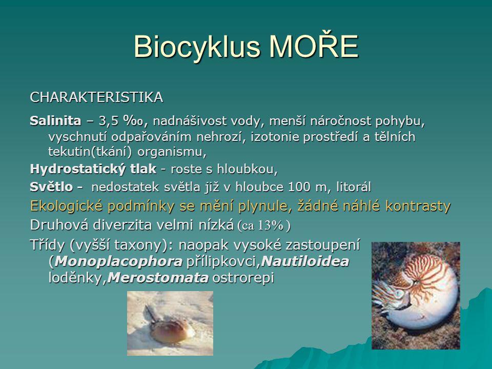 Biocyklus MOŘE CHARAKTERISTIKA Salinita – 3,5 ‰, nadnášivost vody, menší náročnost pohybu, vyschnutí odpařováním nehrozí, izotonie prostředí a tělních