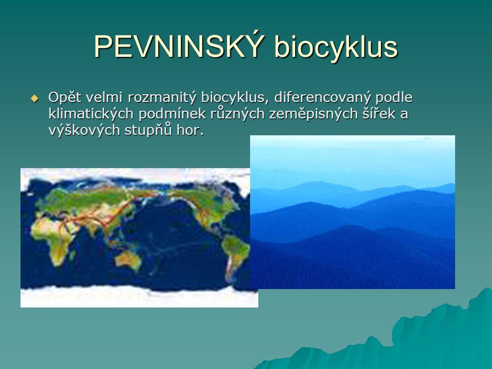 PEVNINSKÝ biocyklus  Opět velmi rozmanitý biocyklus, diferencovaný podle klimatických podmínek různých zeměpisných šířek a výškových stupňů hor.
