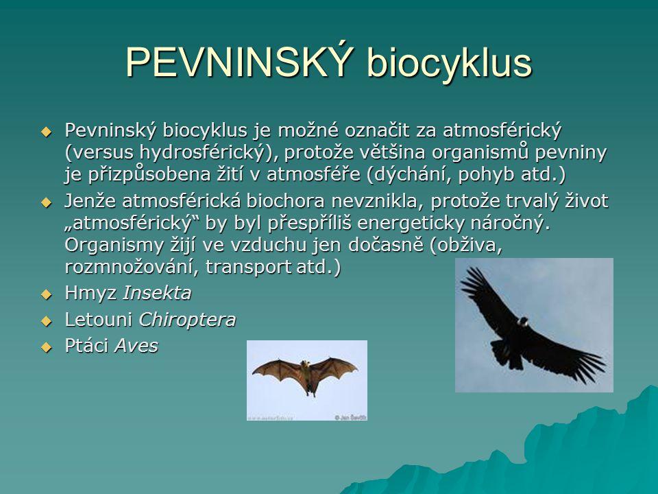 PEVNINSKÝ biocyklus  Pevninský biocyklus je možné označit za atmosférický (versus hydrosférický), protože většina organismů pevniny je přizpůsobena ž