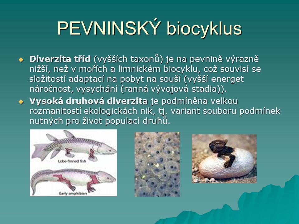 PEVNINSKÝ biocyklus  Diverzita tříd (vyšších taxonů) je na pevnině výrazně nižší, než v mořích a limnickém biocyklu, což souvisí se složitostí adapta