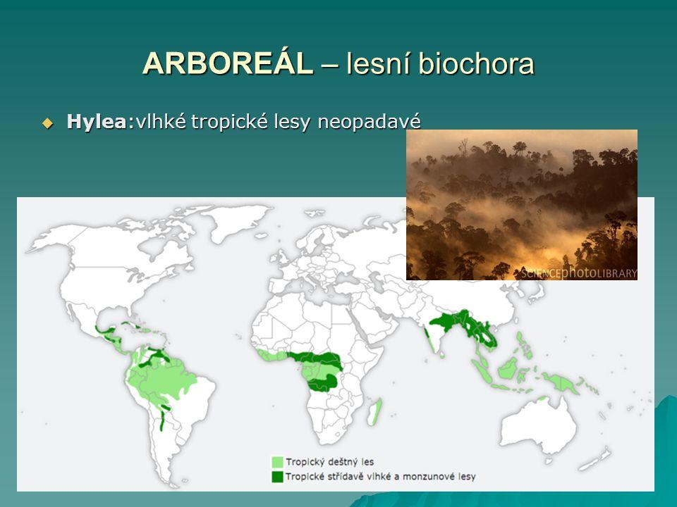 ARBOREÁL – lesní biochora  Hylea:vlhké tropické lesy neopadavé