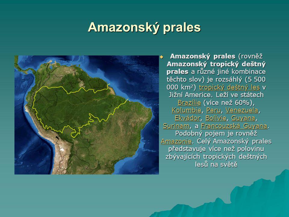Amazonský prales       Amazonský prales (rovněž Amazonský tropický deštný prales a různé jiné kombinace těchto slov) je rozsáhlý (5 500 000 km 2