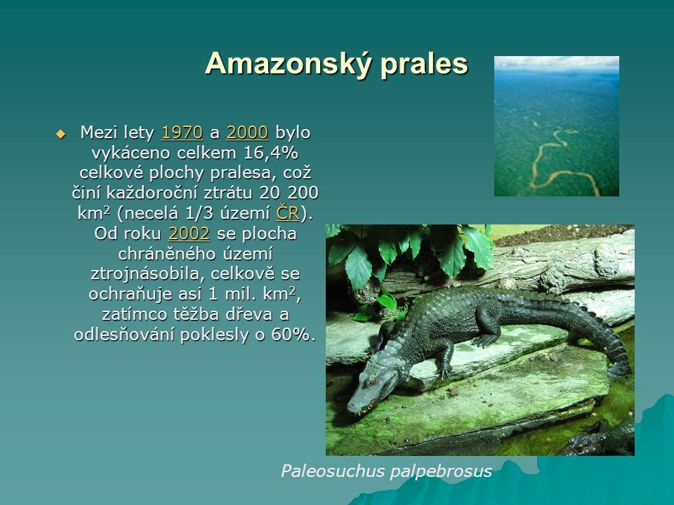Amazonský prales  Mezi lety 1970 a 2000 bylo vykáceno celkem 16,4% celkové plochy pralesa, což činí každoroční ztrátu 20 200 km 2 (necelá 1/3 území Č