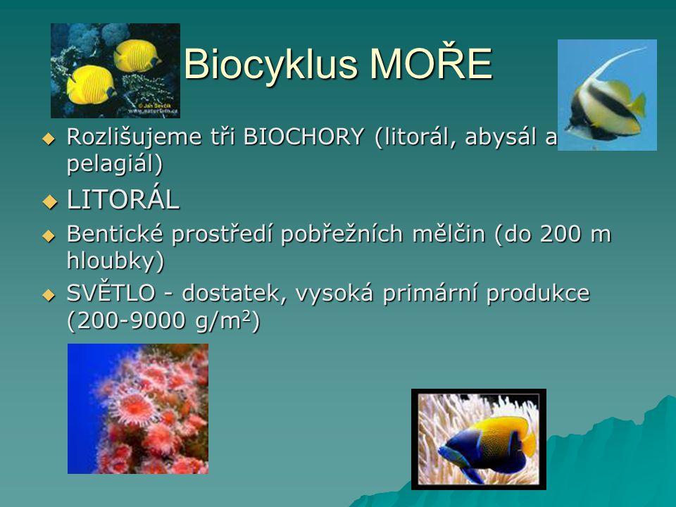 Biocyklus MOŘE  Rozlišujeme tři BIOCHORY (litorál, abysál a pelagiál)  LITORÁL  Bentické prostředí pobřežních mělčin (do 200 m hloubky)  SVĚTLO -