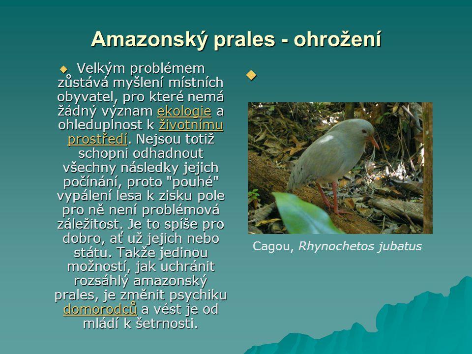 Amazonský prales - ohrožení Amazonský prales - ohrožení  Velkým problémem zůstává myšlení místních obyvatel, pro které nemá žádný význam ekologie a o