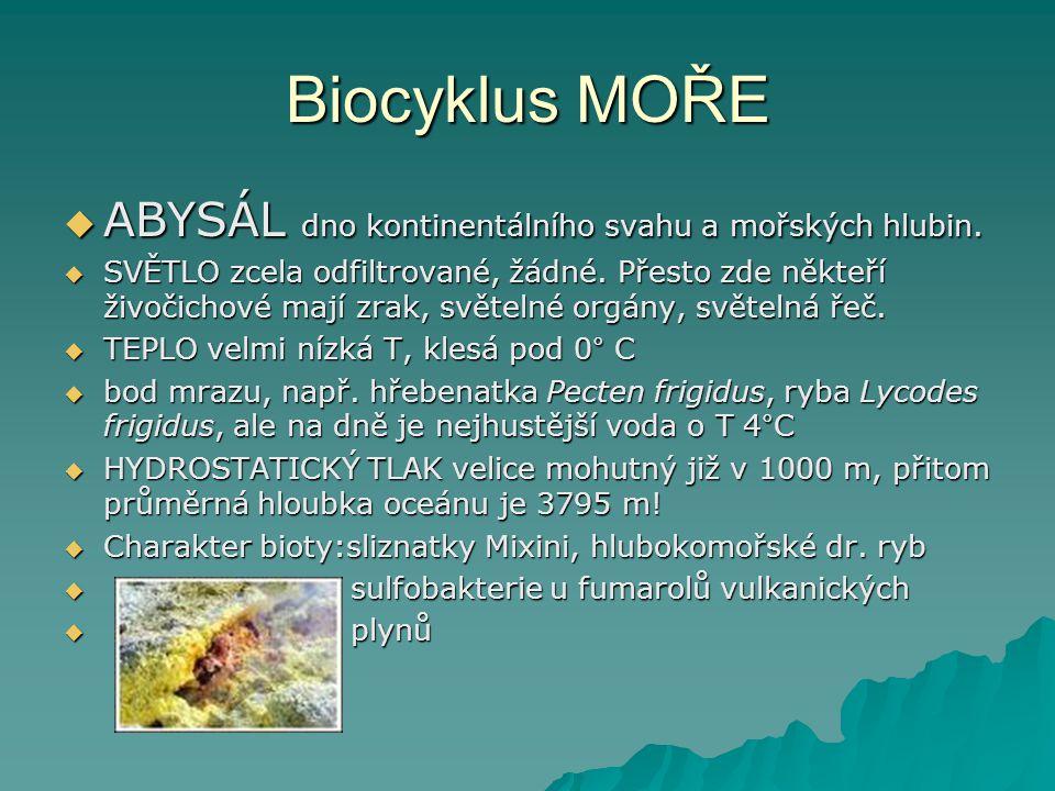 Biocyklus MOŘE  ABYSÁL dno kontinentálního svahu a mořských hlubin.  SVĚTLO zcela odfiltrované, žádné. Přesto zde někteří živočichové mají zrak, svě