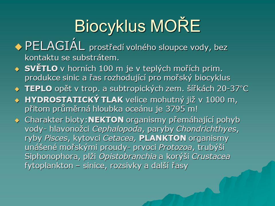 Biocyklus MOŘE  PELAGIÁL prostředí volného sloupce vody, bez kontaktu se substrátem.  SVĚTLO v horních 100 m je v teplých mořích prim. produkce sini