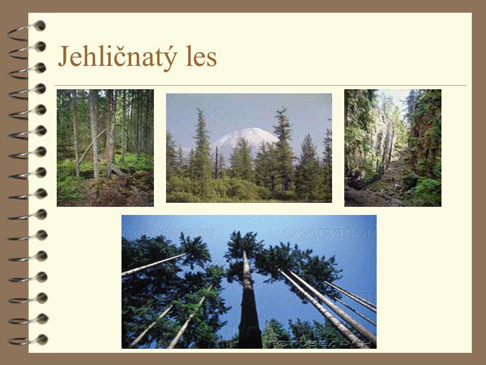 Rostliny lesa 4 Dřeviny 4 * nahosemenné, jehličnany