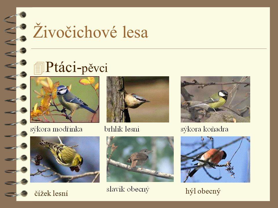 Živočichové lesa 4 Ptáci- pěvci čížek lesní hýl obecný