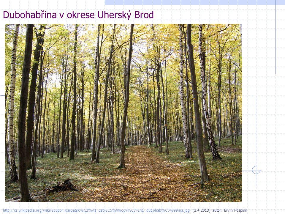 Dubohabřina v okrese Uherský Brod http://cs.wikipedia.org/wiki/Soubor:Karpatsk%C3%A1_ost%C5%99icov%C3%A1_dubohab%C5%99ina.jpghttp://cs.wikipedia.org/w