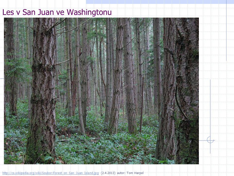 Les v San Juan ve Washingtonu http://cs.wikipedia.org/wiki/Soubor:Forest_on_San_Juan_Island.jpghttp://cs.wikipedia.org/wiki/Soubor:Forest_on_San_Juan_