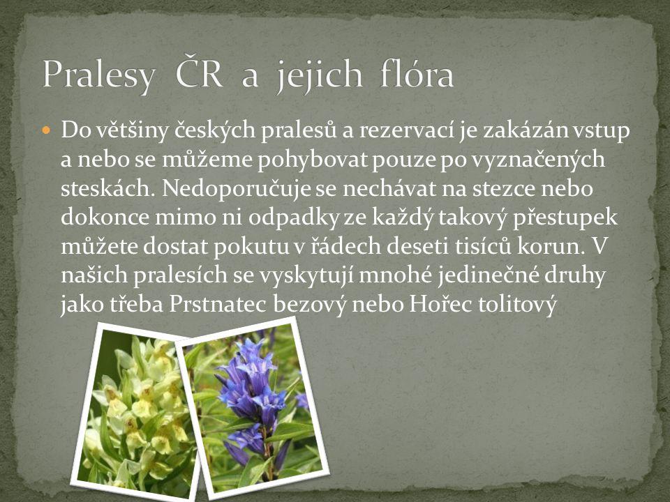 Do většiny českých pralesů a rezervací je zakázán vstup a nebo se můžeme pohybovat pouze po vyznačených steskách. Nedoporučuje se nechávat na stezce n