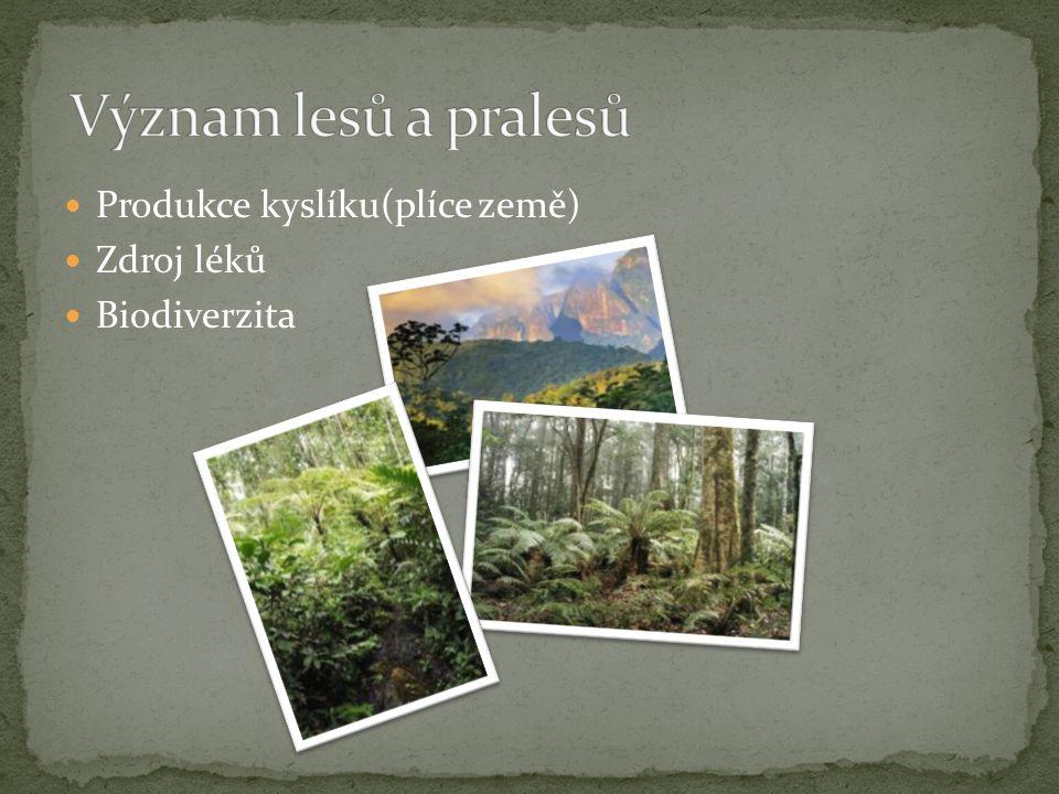 Produkce kyslíku(plíce země) Zdroj léků Biodiverzita