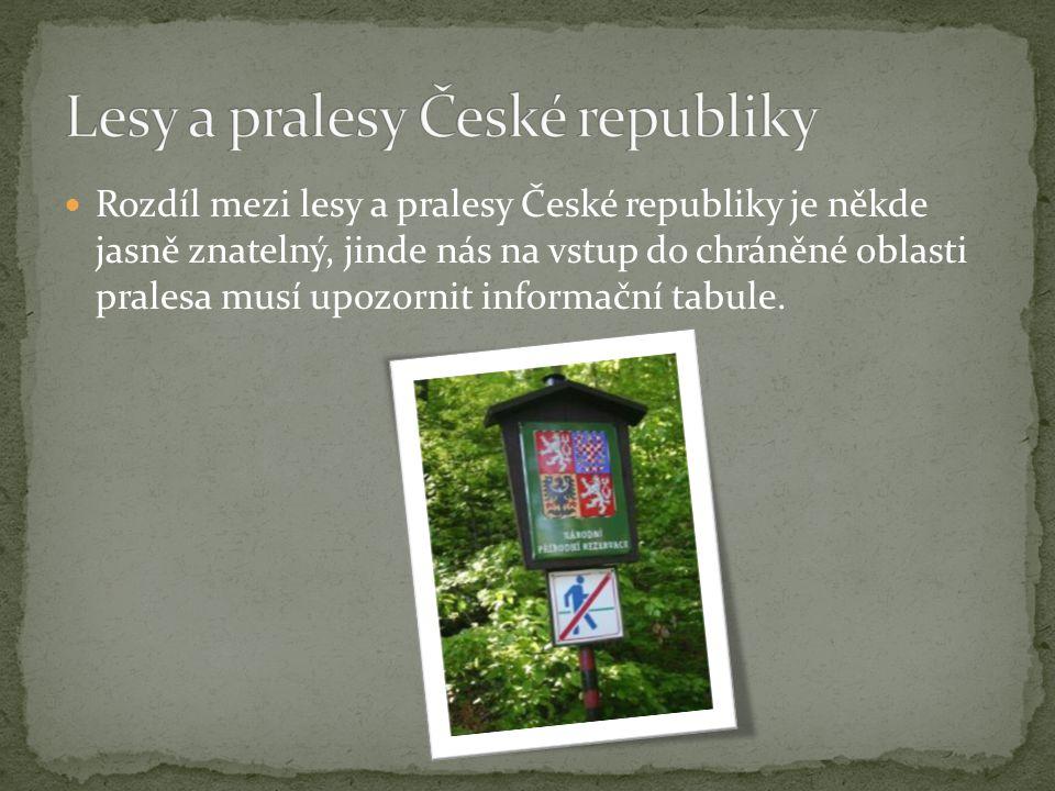 Rozdíl mezi lesy a pralesy České republiky je někde jasně znatelný, jinde nás na vstup do chráněné oblasti pralesa musí upozornit informační tabule.
