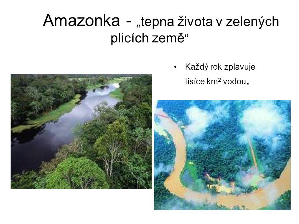 """Amazonka - """"tepna života v zelených plicích země """" Každý rok zplavuje tisíce km 2 vodou."""