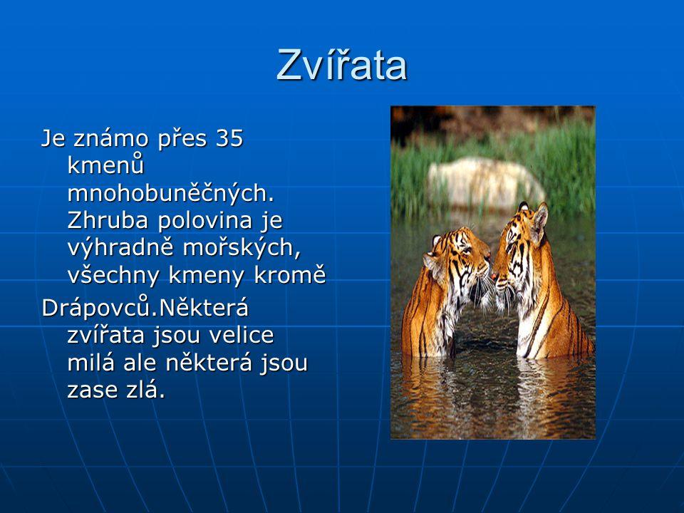 Savany Savana je označení pro travnaté oblasti tropickýc a subtropických oblastí.