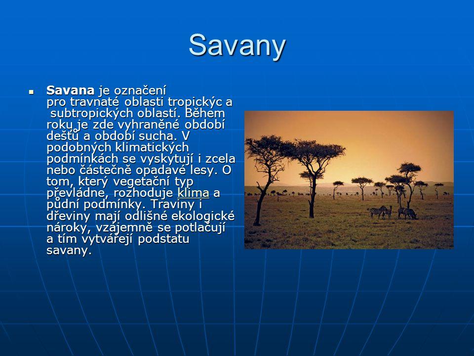 Savany Savana je označení pro travnaté oblasti tropickýc a subtropických oblastí. Během roku je zde vyhraněné období dešťů a období sucha. V podobných