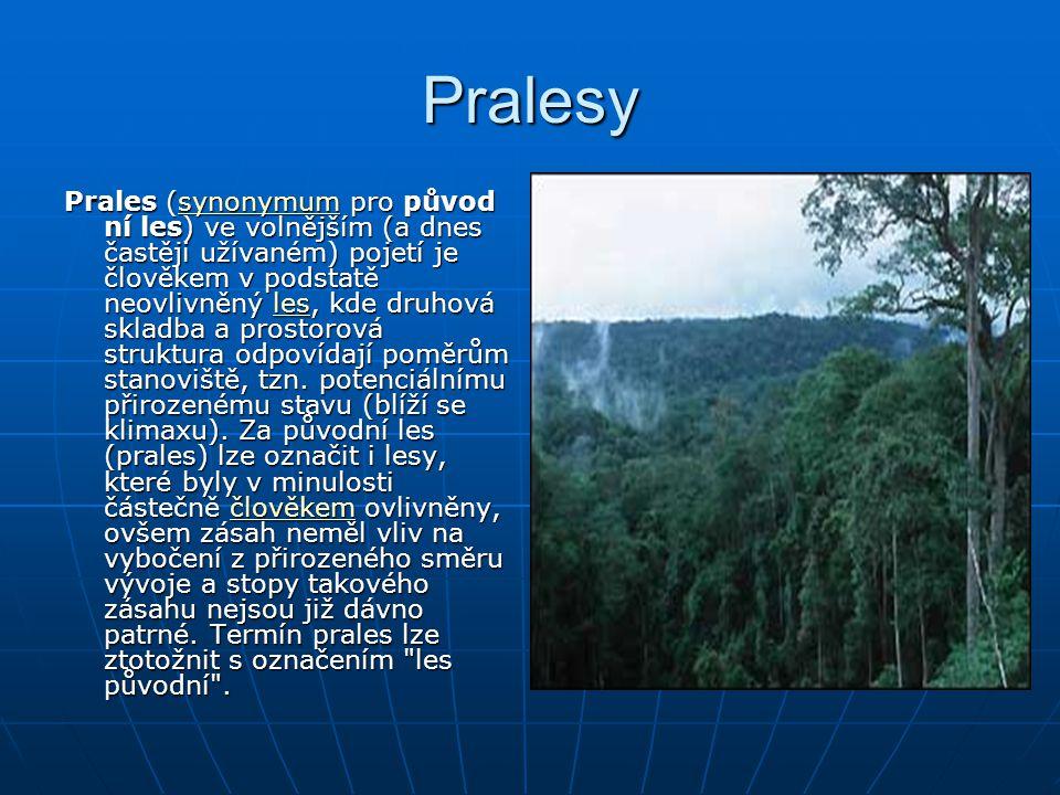 Pralesy Prales (synonymum pro původ ní les) ve volnějším (a dnes častěji užívaném) pojetí je člověkem v podstatě neovlivněný les, kde druhová skladba