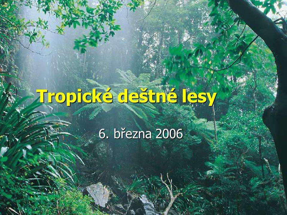 Tropické deštné lesy 6. března 2006