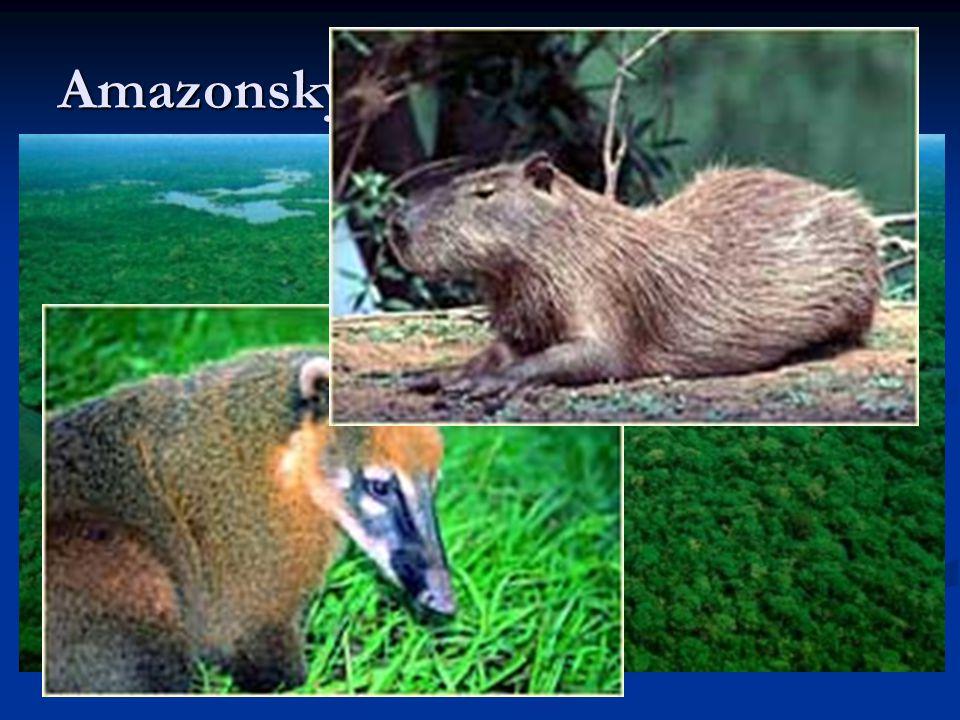 Amazonský deštný prales Pokrývá téměř celé území Severu a části států Mato Grosso a Maranhao. Se svojí celkovou rozlohou 3,6 mil. km2 (42% území Brazí