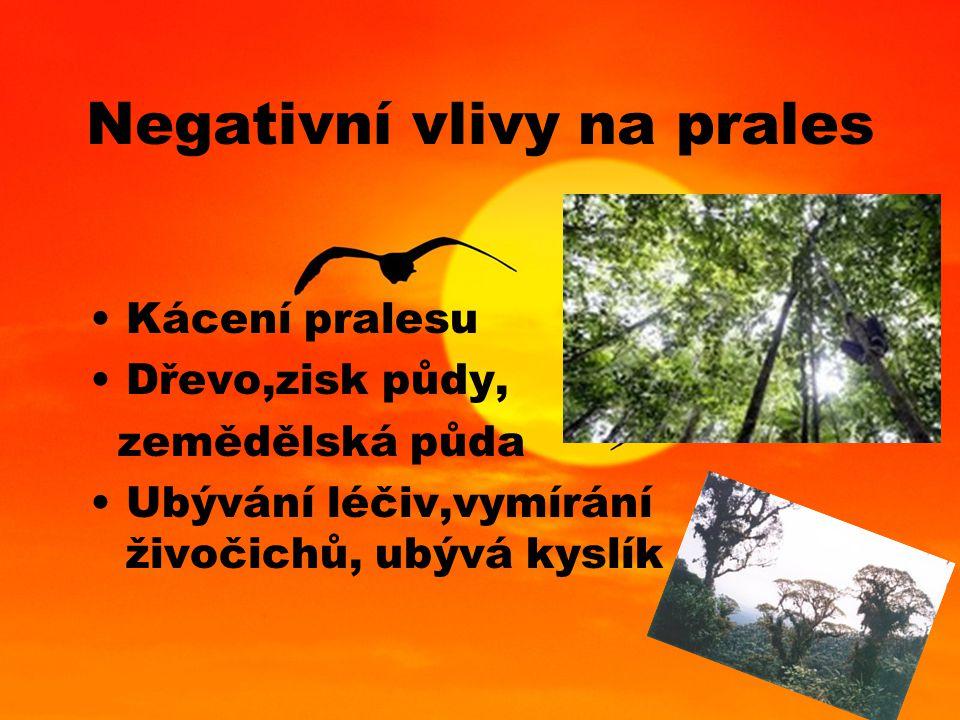 Negativní vlivy na prales Kácení pralesu Dřevo,zisk půdy, zemědělská půda Ubývání léčiv,vymírání živočichů, ubývá kyslík
