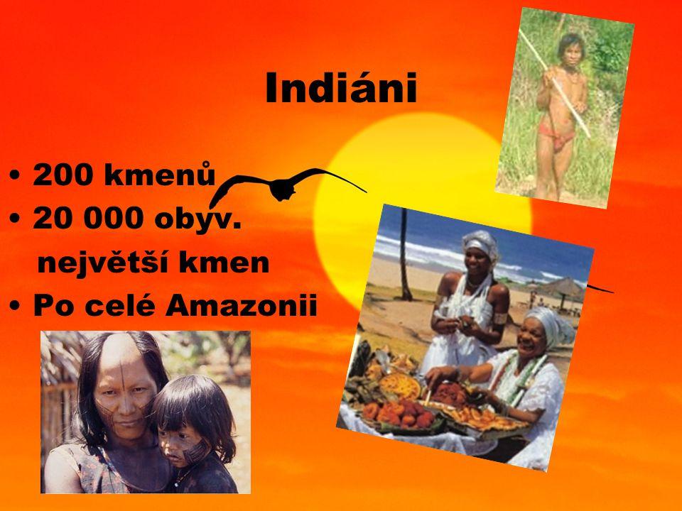 Indiáni 200 kmenů 20 000 obyv. největší kmen Po celé Amazonii