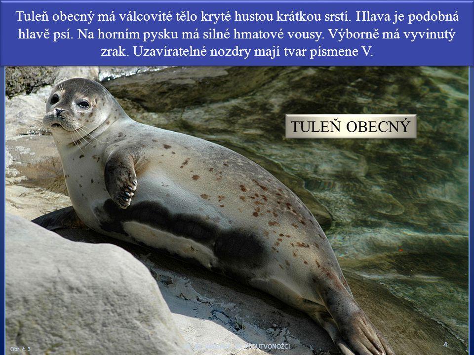 Tuleň obecný má válcovité tělo kryté hustou krátkou srstí. Hlava je podobná hlavě psí. Na horním pysku má silné hmatové vousy. Výborně má vyvinutý zra