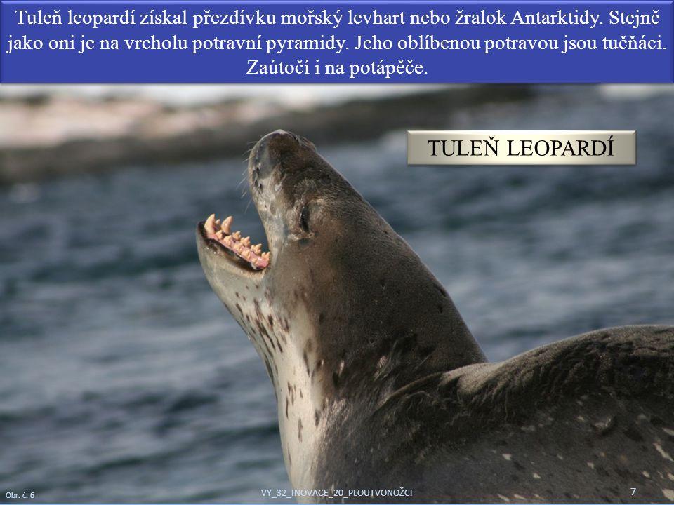 Tuleň leopardí získal přezdívku mořský levhart nebo žralok Antarktidy. Stejně jako oni je na vrcholu potravní pyramidy. Jeho oblíbenou potravou jsou t