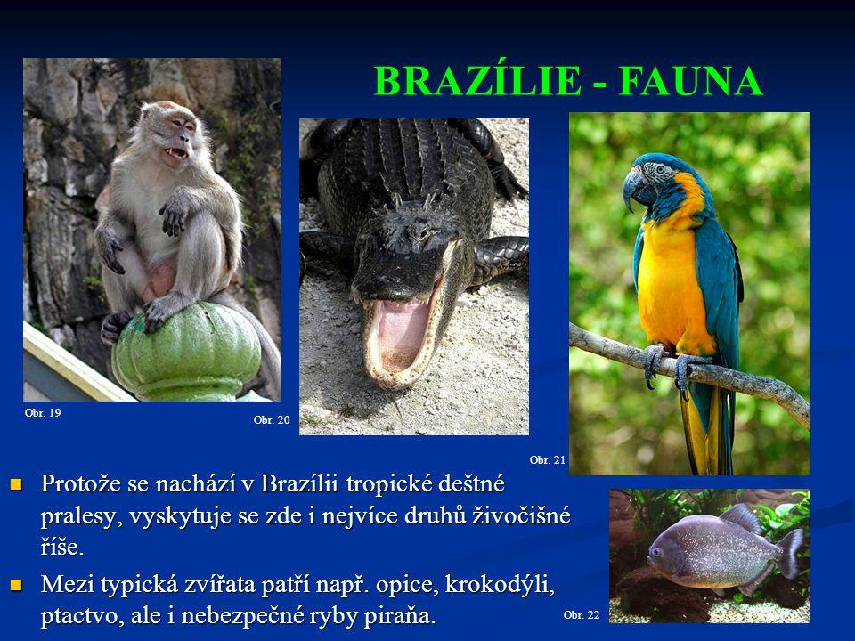 Původní indiánské obyvatelstvo bylo zahnáno do rezervací v tropickém deštném pralese.