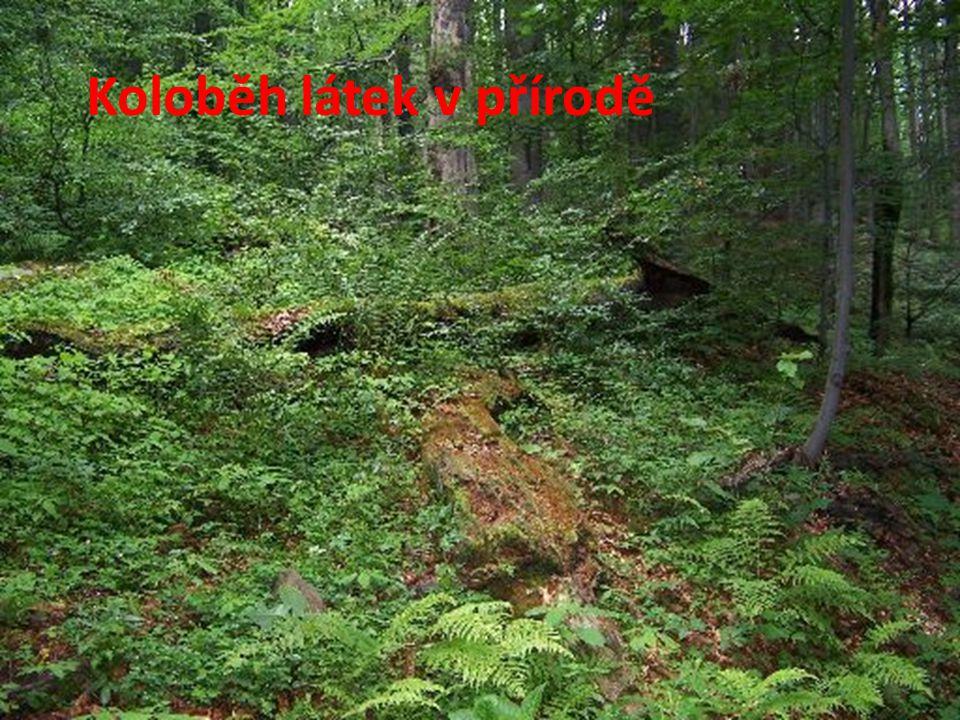 Koloběh látek v přírodě