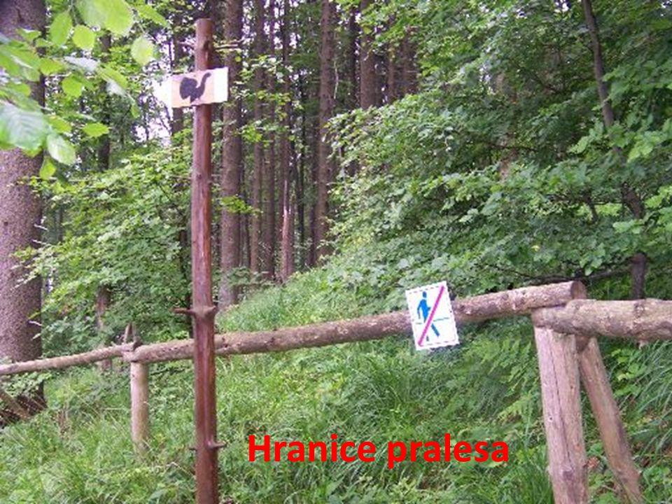 Hranice pralesa