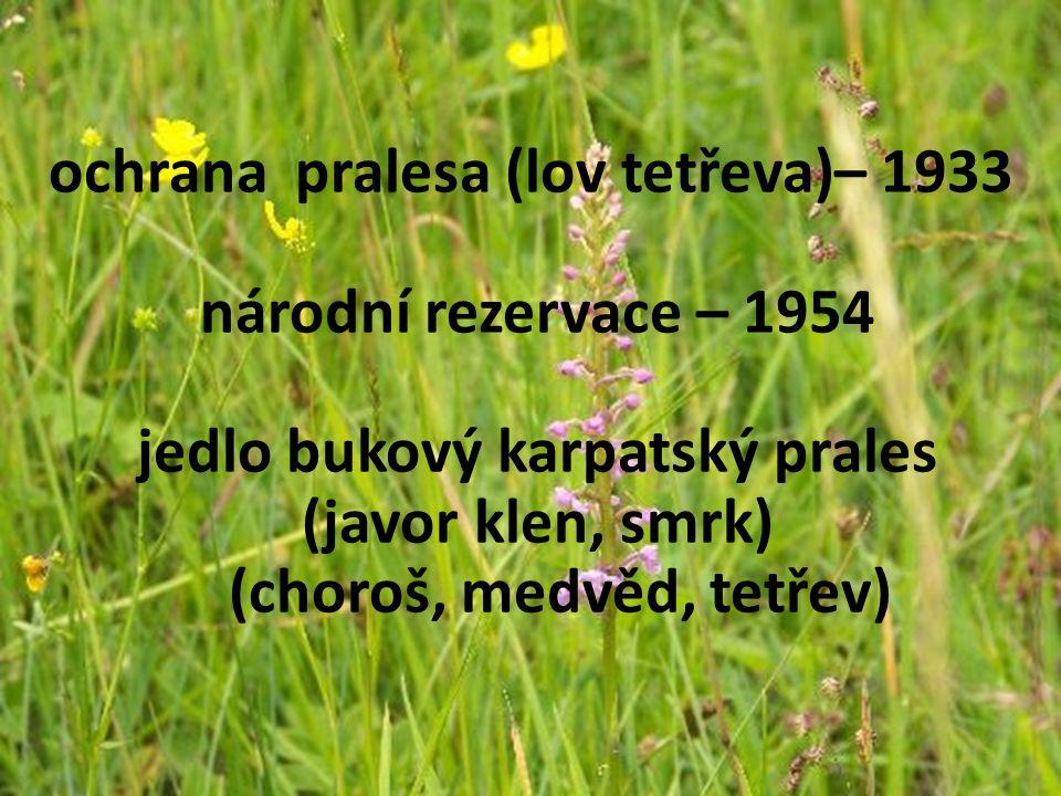 ochrana pralesa (lov tetřeva)– 1933 národní rezervace – 1954 jedlo bukový karpatský prales (javor klen, smrk) (choroš, medvěd, tetřev)
