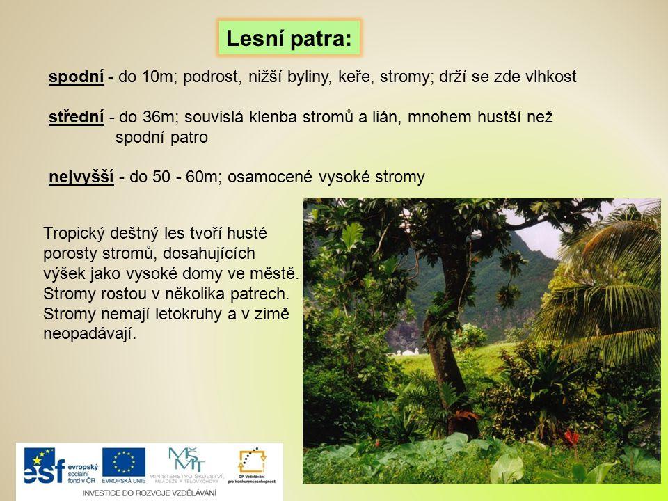 spodní - do 10m; podrost, nižší byliny, keře, stromy; drží se zde vlhkost střední - do 36m; souvislá klenba stromů a lián, mnohem hustší než spodní pa