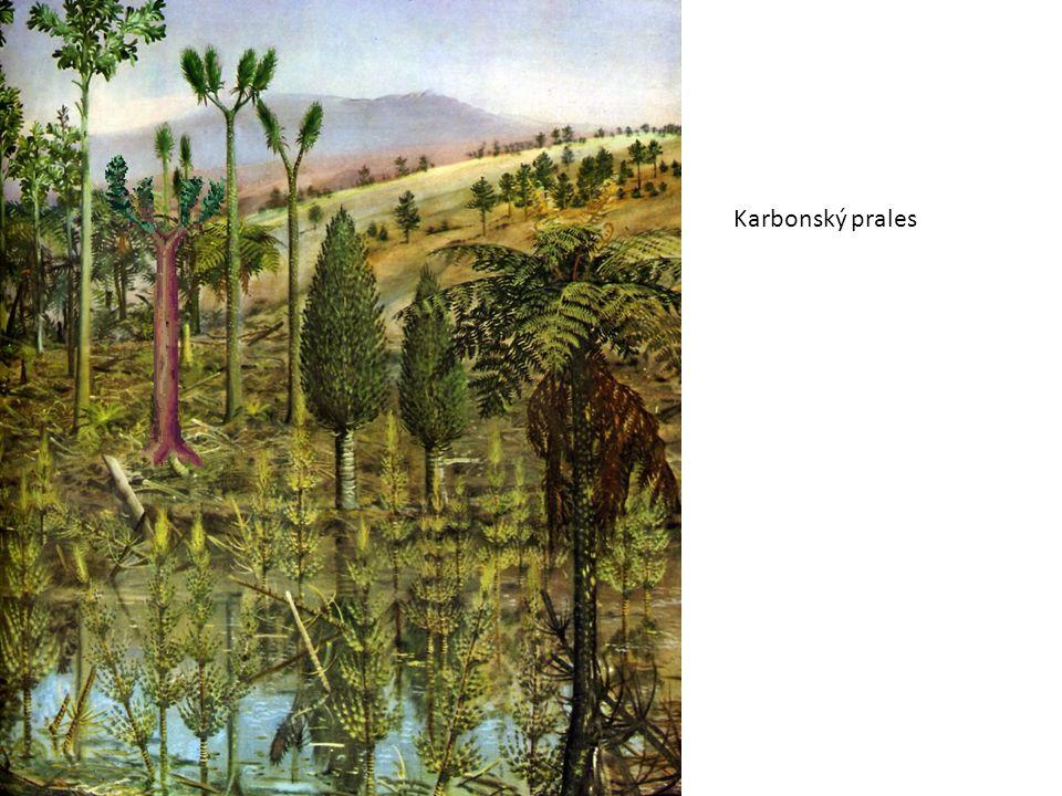 Použité zdroje: Biomach, výpisky z biologie: Systém a evoluce rostlin.