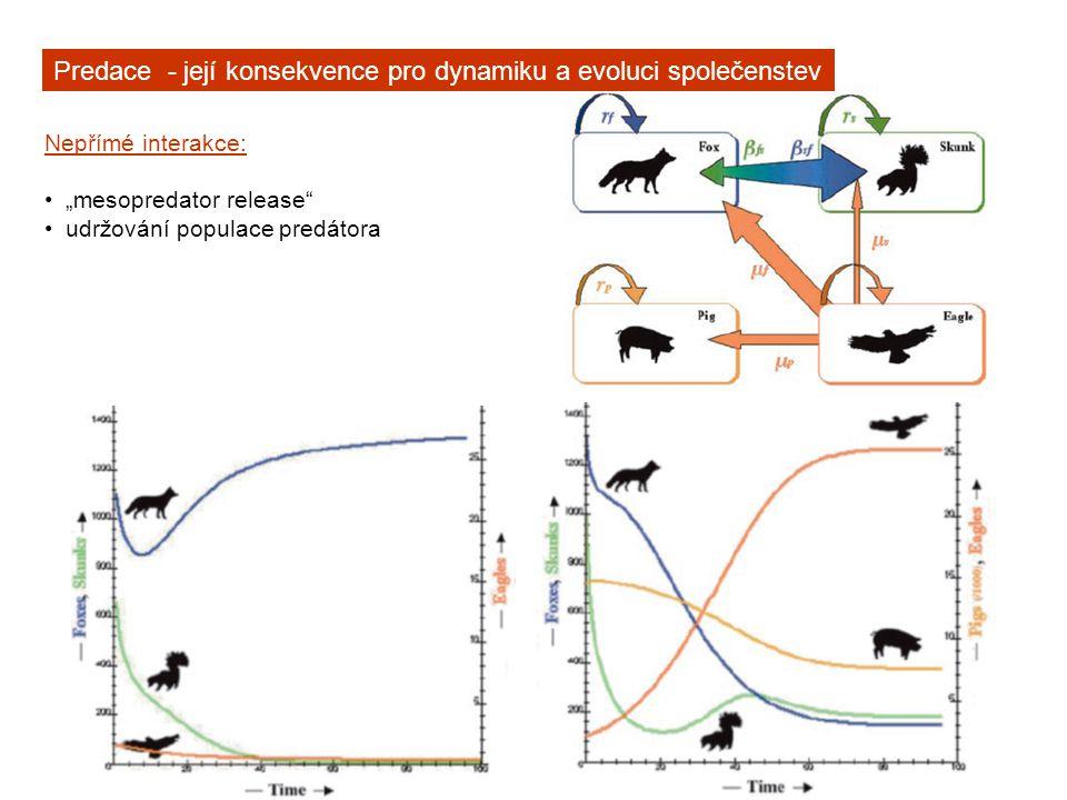 """Predace - její konsekvence pro dynamiku a evoluci společenstev Nepřímé interakce: """"mesopredator release udržování populace predátora """"resource pulses , dočasně měnící predační tlaky Bělověžský prales"""