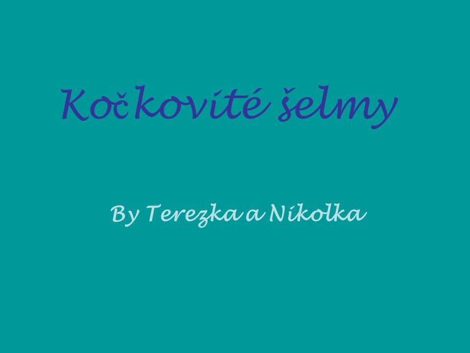 Ko č kovité šelmy By Terezka a Nikolka
