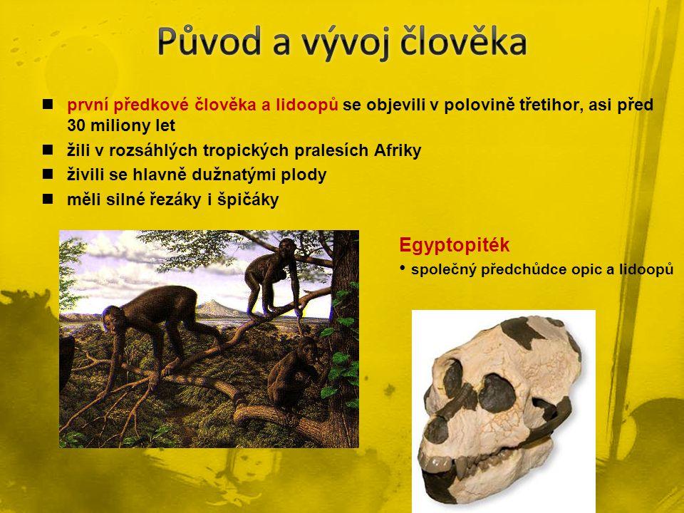 první předkové člověka a lidoopů se objevili v polovině třetihor, asi před 30 miliony let žili v rozsáhlých tropických pralesích Afriky živili se hlav
